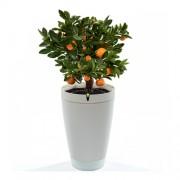 Parrot Flower Pot - интелигентна саксия, грижеща се за вашите растения за iOS и Android (бял)