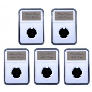 5 Pak Little Bear Elite Certified-Style Coin Holder for US Indian Head Half Eagle $5 Gold Piece