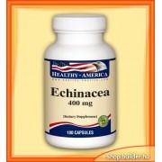 Echinacea (100 kom.)