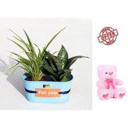 ES BEST INDOOR DANILLA AND SNAKE PLANT GIFT WITH FREE COMBO GIFT - 6 TEDDYBEAR-PINK