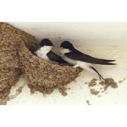 4-THE BIRDS БАРИЕРА ЗА ПТИЦИ, ТЕЧЕН ПРЕПАРАТ СРЕЩУ ПТИЦИ (ЛЯСТОВИЦИ, ГЪЛЪБИ, СКОРЦИ И ДР.) - 600 мл.