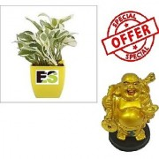 Es Hybride White Lucky Money Plant With Lucky Men Statue