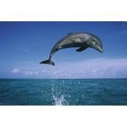 Geen Poster dolfijn 61 x 91,5 cm - Action products