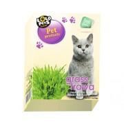 Lolo iarba pentru pisici