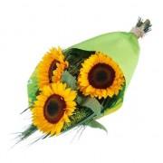 Kwiaty trzy słoneczniki