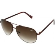 Tommy fashion Oval Sunglasses(Brown)