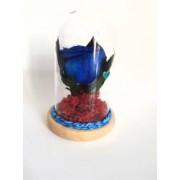 Trandafir criogenat in cupola albastru