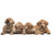 Golden Retriever Puppies Shaped Puzzle