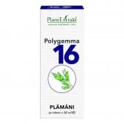 Polygemma nr. 16 Plamani