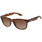 Cardon Brown Wayfarer Gradient Polarised UV Protected Sunglass