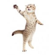 Tapet autocolant -Pisica 11 - 191X150cm