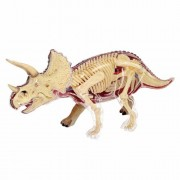 Learn About The Triceratops Dinosaur Anatomy 9 Inch 4 D See Thru Model (Age 8+)