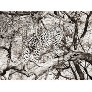 MondiArt Alu Leopard climb 1041172