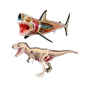 Mozlly Value Pack - Fame Master 4D Vision 13 inch Long Great White Shark and 11 inch T-Rex Anatomy Model with Stands, Guide Books - Anatomy Model Educational Playsets - Item #K119007-119009