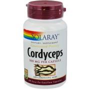 Cordyceps 500 mg 60 capsule