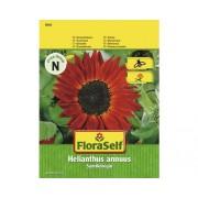 """FloraSelf seminte de floarea-soarelui """"Regina de catifea"""""""