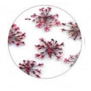 Flores Secas Color-006