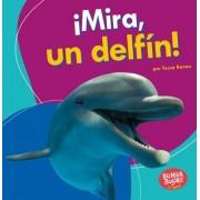Mira, Un Delfin! (Look, a Dolphin!)