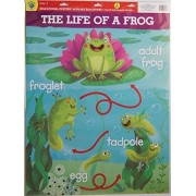 Teaching Tree Large Educational Wall Posters - A Butterflys Life and The Life of a Frog - Set of 2 - 17 x 21.5