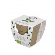 Dille&Kamille Mini-basilic biologique en pot