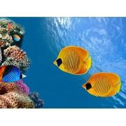 PigBangbang,Handmade Intellectiv Games 20.6 X 15.1'' Premium Basswood Can DIY 500 Piece Nice Painting Present to Lover,Friend ECT Home Decoration-Fish Underwater World Animals