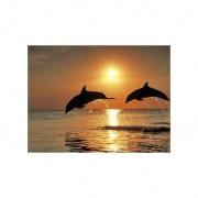 Spelende Dolfijnen