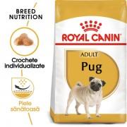Pug Adult 1.5kg