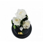 Aranjament 3 Trandafiri Criogenati Albi Queen Roses in cupola de sticla