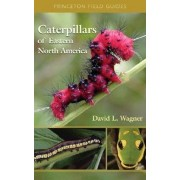 Caterpillars of Eastern North America: A Guide to Identification and Natural History, Paperback/David L. Wagner