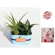 ES BEST INDOOR DANILLA AND SNAKE PLANT GIFT WITH FREE COMBO GIFT - 6TEDDYBEAR