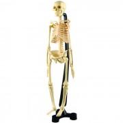 Edu-Toys Сборная модель скелета