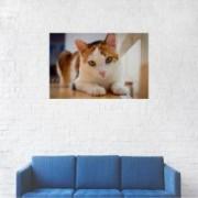Tablou Canvas Orange cat on photo 60 x 90 cm