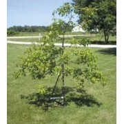 Tree Trainer For Small Trees