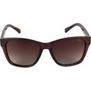 INVU Rectangular Sunglasses(Brown)
