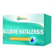 Bulbine Natalensis 250mg 30 Cáps
