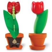Budowa kwiatu - model przekrojowy z pianki