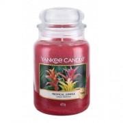 Yankee Candle Tropical Jungle 623 g vonná sviečka unisex