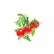 Recharge triple de Mini-Tomates pour Smart Garden - Click and Grow