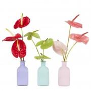 Boeket Anthurium Rood/Groen/Rose + Combinatie 3 vaasjes
