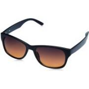 Fastrack Wrap-around Sunglasses(Brown)