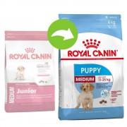 Royal Canin Size 2x15kg Medium Junior Royal Canin - valpfoder