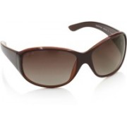 Glares by Titan Aviator Sunglasses(Brown)