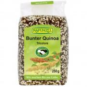 Quinoa colorata bio