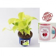 ES GOLDEN MONEY PLANT LIVE NATURAL With Gift Anniversary Gift Mug