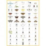 Hjelms Poster Svenska Insekter