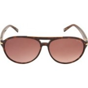 Tommy Hilfiger Aviator Sunglasses(Brown)