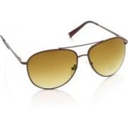 Life Aviator Sunglasses(Brown)