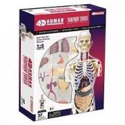 4D Master Human Anatomy - Transparent Human Torso Model