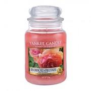 Yankee Candle Sun-Drenched Apricot Rose candela profumata 623 g unisex