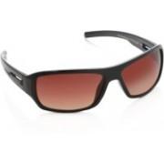 Farenheit Round Sunglasses(Brown)